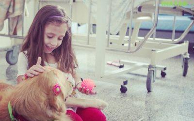 Cães em hospitais, uma realidade possível.