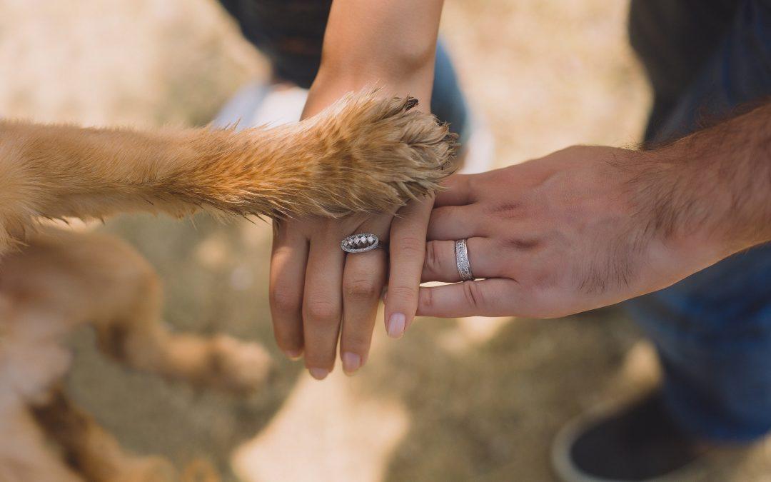 """Infográfico """"Aspectos importantes para tutores de cães em IAA"""""""