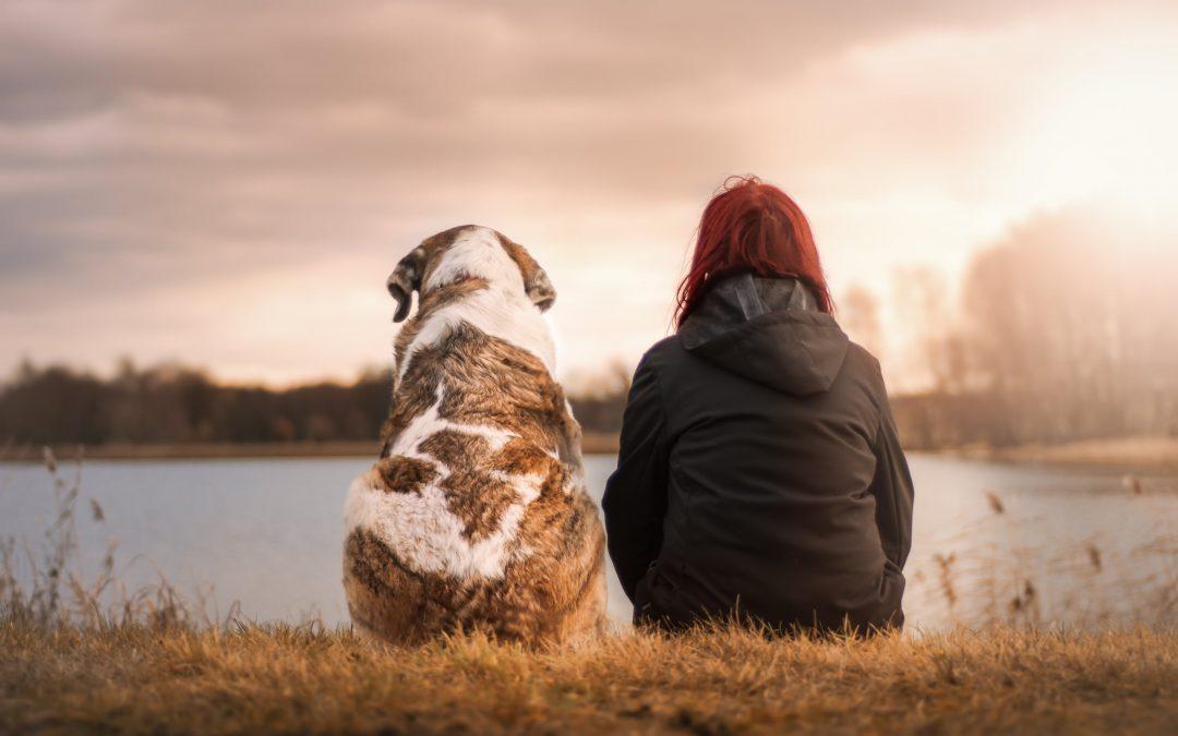 Diretrizes para o bem estar humano e animal em IAA (IAHAIO)