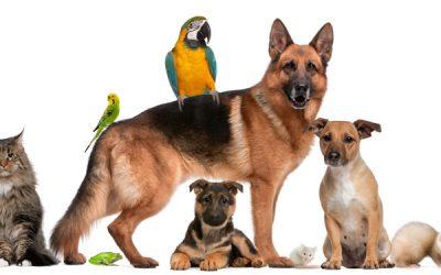 Abril Laranja: mês de prevenção à crueldade animal
