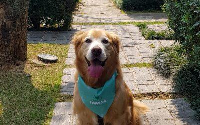 Homenagem dia do cão: receita de crepezinho com recheio de creme de abóbora com coco