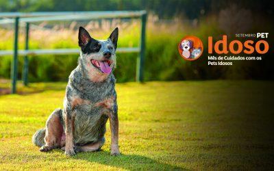 Vetnil® lança Campanha Setembro Pet Idoso para reforçar os cuidados com os pets de idade avançada